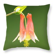 Columbine Flower In Sunlight Throw Pillow