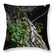 Columbine Flowers On River Rock Throw Pillow