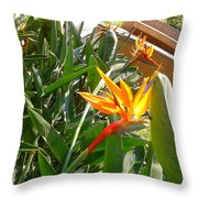 Combination Of Yellow-orange And Red Flower   Throw Pillow