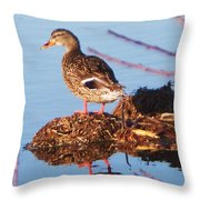 Comedian Duck Throw Pillow