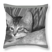 Comfy Kitten Throw Pillow