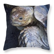 Coming Out Of Shell Throw Pillow
