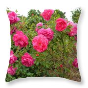Coming Up Rosy Throw Pillow