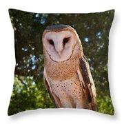 Common Barn Owl 1 Throw Pillow