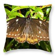 Common Birdwing Butterfly Throw Pillow