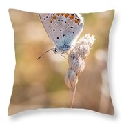 Common Blue Butterfly Throw Pillow