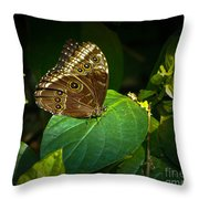 Common Blue Morpho Moth Throw Pillow