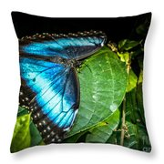 Common Blue Morpho Throw Pillow