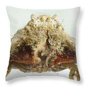 Common Box Crab Throw Pillow
