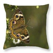 Common Buckeye 1 Throw Pillow