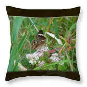 Common Buckeye Butterfly - Junonia Coenia Throw Pillow