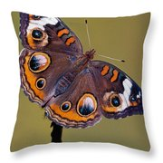 Common Buckeye Precis Coenia Throw Pillow