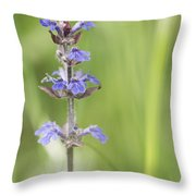 Common Bugle Throw Pillow