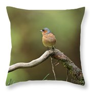 Common Chaffinch Throw Pillow