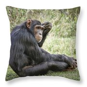 Common Chimpanzee  Pan Troglodytes Throw Pillow