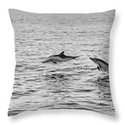Common Dolphins Leaping. Throw Pillow
