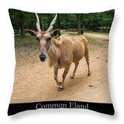 Common Eland Throw Pillow by Chris Flees