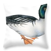 Common Goldeneye  Throw Pillow by Anonymous