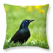 Common Grackle Throw Pillow by Christina Rollo