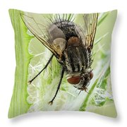 Common House Fly 0.9x Throw Pillow