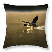 Common Loon Pictures 147 Throw Pillow