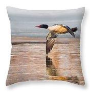 Common Merganser In Flight Square Throw Pillow