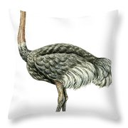 Common Ostrich Throw Pillow