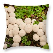 Common Puffball Mushrooms Lycoperdon Perlatum Throw Pillow