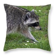 Common Raccoon Throw Pillow