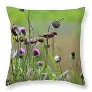 Common Redpoll In A Field Of Thistle Throw Pillow
