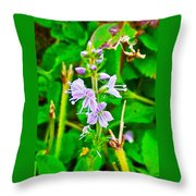 Common Speedwell On Skyline Trail In Cape Breton Highlands National Park-nova Scotia  Throw Pillow