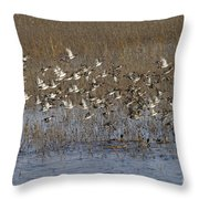 Common Teal Anas Crecca Throw Pillow