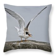 Common Tern Pictures 34 Throw Pillow
