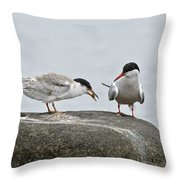 Common Tern Pictures 39 Throw Pillow