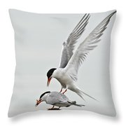 Common Tern Pictures 40 Throw Pillow