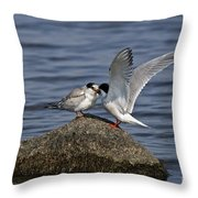 Common Tern Pictures 48 Throw Pillow