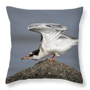 Common Tern Pictures 67 Throw Pillow