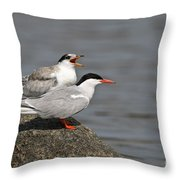 Common Tern Pictures 76 Throw Pillow