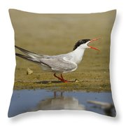 Common Tern Sterna Hirundo Throw Pillow by Eyal Bartov