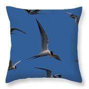 Common Terns Collage Throw Pillow