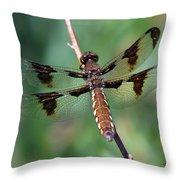 Common White-tail Dragonfly Throw Pillow