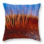 Compound Eye Of A Bee Throw Pillow