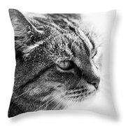 Concentrating Cat Throw Pillow