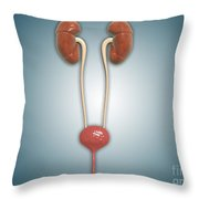 Conceptual Image Of Kidneys With Ureter Throw Pillow