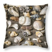 Conch Background Throw Pillow