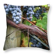 Concord Purple Throw Pillow by Wendy Raatz Photography