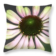 Cone Display Throw Pillow