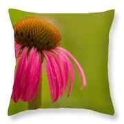 Coneflower - Summer Color Throw Pillow