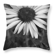 Coneflower And Dusty Miller Bw Throw Pillow