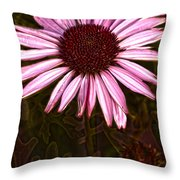 Coneflower And Dusty Miller Hdr Throw Pillow